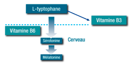 Le L-tryptophane naturel