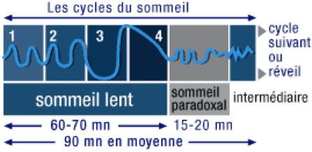 La sérotonine et la structure du sommeil