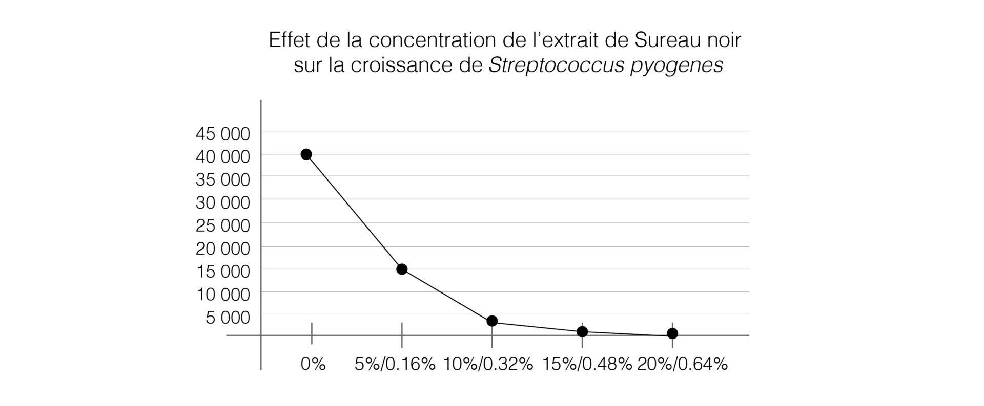 Polyphénols sureau noir Streptococcus pyogenes