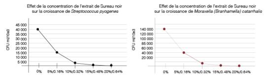 Efficacité Polyphénols Sureau noir Sambucus nigra Streptococcus pyogenes Moraxella catarrhalis